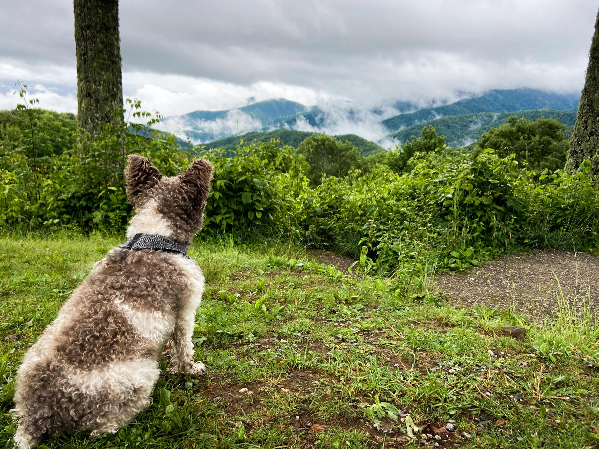 great-smoky-mountains-fog-7